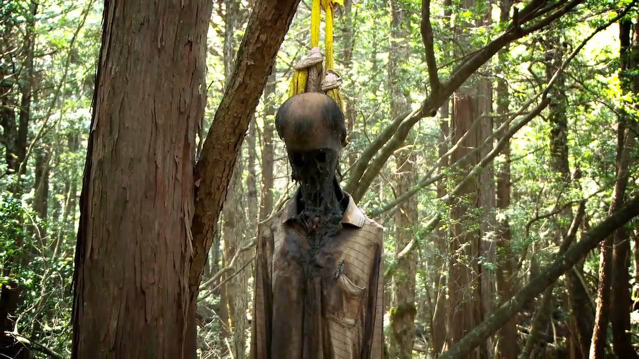 Aokigahara - Japan's Suicide Forest - www thegypsythread org
