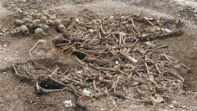 Poveglia Bone Excavation